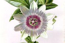 Botanical Love / The magic of all thing botanical LOVE