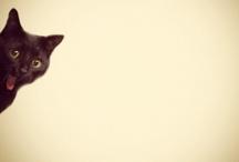 Cat-holic.