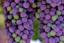 Frutas y Hortalizas  / by Anchonia Castillo López