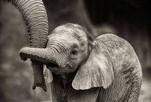 Naturaleza mágica / El mundo está lleno de creaturas hermosamente asombrosas.