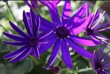 Frühling / Zauberhafte Blumenwelt in der Frühlingszeit :)