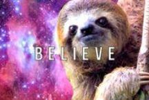 sloths / Sloth