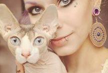 sphynx / Sphynx cats