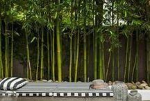 Bamboe in de tuin | Inspiratie