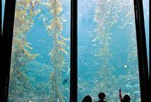 Zoos + Aquariums