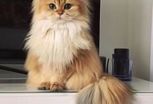 Cats / Many kinds of cat breeds