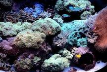 Reef tanks / Reef tanks maintained by Aquaholics Aquarium Services