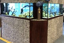 Fresh water aquariums / Maintained by Aquaholics Aquarium Services
