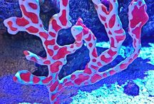 Corals / Aquarium corals and inverts. Taken by Aquaholics maintenance team