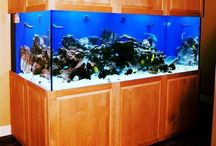 Salt water fish aquariums / Saltwater aquariums installed and maintained by Aquaholics
