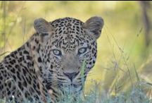 South African Game Lodges & Wildlife