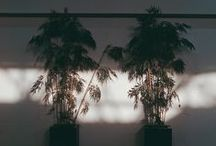 Flora / Plants, flowers, living things