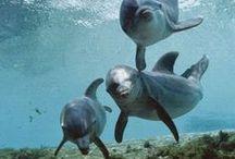 *sealife
