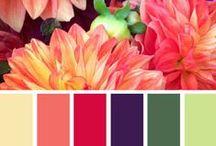 Paletas / Paletas de colores   Combinación de colores