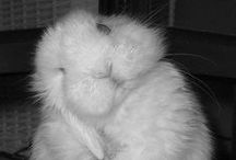 Rascally Rabbits / by J C