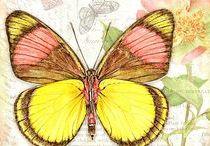 ART - Butterfly wings
