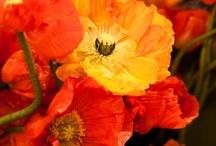 Petals & Blooms