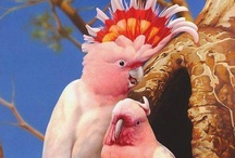 Love Birds .♥❤♥·:*¨¨*:·.*♥ / Aviary Delights :*¨¨*:·.* / by ✿⊱Tricia ♥·:*¨¨*:·♥ Wood ✿⊱