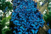 Butterflies  *♥ ✿⊱╮♥❤♥ / Happiness is like a butterfly: The more you chase it. The more it will elude you. But if you turn your attention to other things. it will come and sit softly on your shoulder... ·:*¨¨*: / by ✿⊱Tricia ♥·:*¨¨*:·♥ Wood ✿⊱