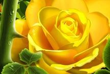 Flores Amarelas as preferidas