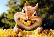 Sometimes you feel like a nut / by ✿⊱Tricia ♥·:*¨¨*:·♥ Wood ✿⊱
