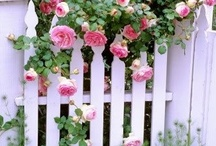 Garden Fences ✿⊱╮ / by ✿⊱Tricia ♥·:*¨¨*:·♥ Wood ✿⊱