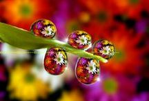 Drops  .·:*¨¨*:·★ / by Tricia Wood ✿⊱