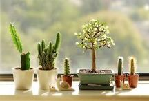 Succulent / All things succulent. / by Virginia Oxford