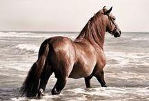 *Horses :)