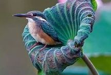 BEAUTIFUL CREATURES / Wonderful world