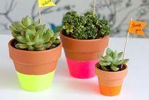 vasos/cactus