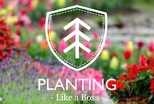 Planting like a boss / Gardening Tips and advices for everyone  Check out in Instagram! @Plantinglikeaboss / by Be Echo
