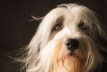 Tassolos! / Dogs, cães, cachorros e tassolinhos!