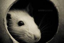 rats and pets stuff