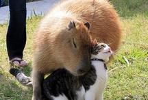 Amazing  Animals Odd Couples