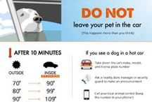 Extra, Extra! All about Pets! / Helpful hints and good tidbits to keep your furry family member healthy and happy