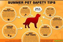 Summertime Pet Tips! / Summertime tips for cats and dogs
