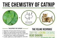 Facts about CATS / Cat Facts.