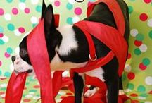 Holiday Pet Safety!