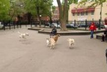 Bark at these dog parks!
