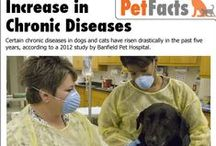 Pet Diseases and Conditions / Common pet diseases and conditions.