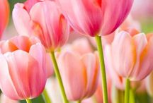 Fabuleux Floraison