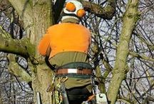 Tree Trimming / by Omar & Brothers Tree Service
