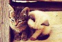 Cuddly Creatures