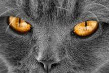 Miradas / ¿Miradas fascinantes?: Las de las Mascotas. Comparte con tus amigos tu pasión por los animales en Mascotea. Te estamos esperando...