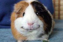 Divertidas / ¡Disfruta de las Mascotas! Las fotos más divertidas, los vídeos más desternillantes... te esperan en nuestra Red Social ¡A mascotear!