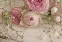 ♥pink roses♥ / WELCOME