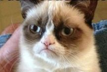 grumpy cat / Are cats suppose to be cute well not this one
