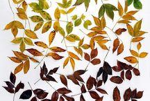 leaves / by liz