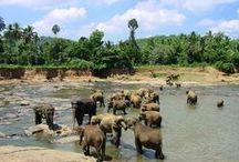 Voyage Sri Lanka / Le Sri Lanka, terre de traditions, vous séduira !